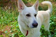 #Nikon #d3200 #dog #Canadian #wolf