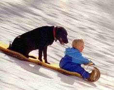 Great picture!  Our yellow Lab, Reno, used to love to go sledding with our boys.