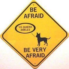 :-D #dog #chihuahua #petshirt http://www.sunfrogshirts.com/Pets/CHIHUAHUA-MOM-1nt5.html?7833