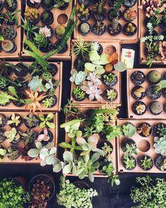 As coisas mais lindas muitas vezes são as menores.  #nature #succulent #cactus