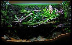 Paludarium The Planted Tank Forum Vivarium Aquarium Aquascape, Planted Aquarium, Aquascaping, Aquarium Landscape, Aquarium Fish, Terrarium Reptile, Terrarium Plants, Vivarium, Aquariums