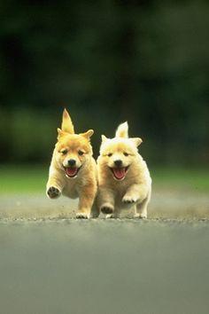 happy cutie pies.