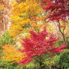 Paint the Fall with Color: Asheville Garden Japanese Maple