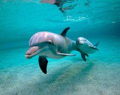 Дельфин с детенышем. Фото