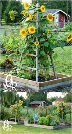 20 Easy DIY Trellis Ideas To Add Charm and Functionality To Your Garden I have . - 20 Easy DIY Trellis Ideas To Add Charm and Functionality To Your Garden I have a few trellises in m - Vegetable Garden Design, Diy Garden, Garden Cottage, Garden Beds, Garden Projects, Vegetable Gardening, Container Gardening, Garden Benches, Outdoor Projects