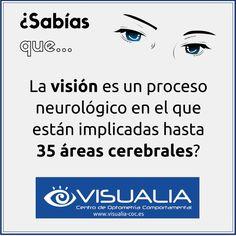 ¿Sabías que la visión es un proceso neurológico en el que están implicadas hasta 35 áreas cerebrales?