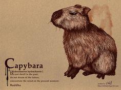 Capybara by chills-lab on deviantART