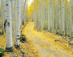 Last Dollar Road near Telluride John Fielder Beautiful World, Beautiful Places, Landscape Photography, Nature Photography, Stunning Photography, Aspen Trees, Birch Trees, On The Road Again, Colorado Homes