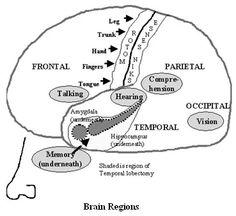Functional neuroanatomy