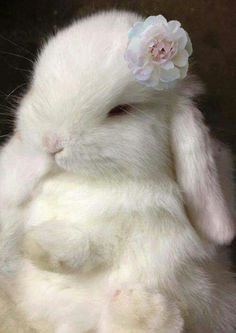 """""""Oh my goodness, she is a beauty.she even has her little Easter """"bonnet"""" .cute little bunny! Cute Baby Bunnies, Funny Bunnies, Cute Babies, White Bunnies, Animals And Pets, Funny Animals, Fluffy Bunny, Tier Fotos, Cute Little Animals"""