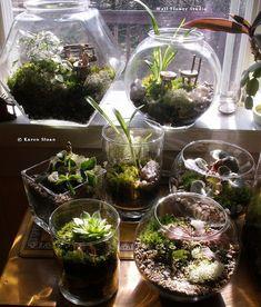 Terrariums and indoor gardening
