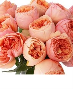 Salmanasar - Rose de jardin - Roses - Fleurs par catégorie | Sierra Flower Finder
