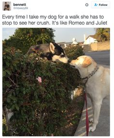 23 Very Good Dogs Who Will Make You Feel Just A Little Bit Better