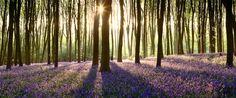 micheldever wood hampshire england - Hledat Googlem