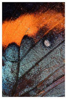 Galaxy Scales by Evanita W Montalvo Print Available