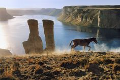 Paysage avec un cheval Afghanistan, 2002 Photo Steeve McCurry