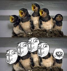 LOL Face Birds