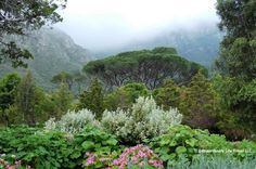 Another shot of Kirstenbosch Botanical Gardens, Cape, South Africa.