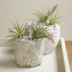 9 ideas for growing and displaying air plants | BabyCenter Blog