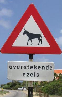 Overstekende ezels - donkey crossing road