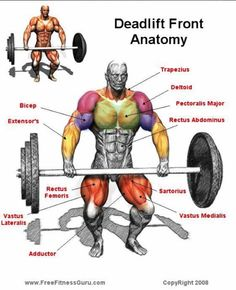 Dead lift anatomy....this is why I love the dead lifts!!