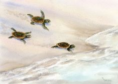 Lots of Loggerhead turtles nest at our local beaches. People watch them day and night to protect the hatchlings and make sure they get to the ocean.This print is a giclee on Arches hotpress watercolor paper. It will be backed with flaw board and e...