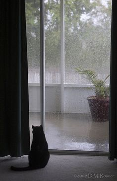 Darn the rain