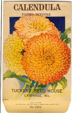 CALENDULA! (Pastel Mixture) Vintage Flower Seed Packet Tuckers Seed House Lithograph (Carthage, Missouri)