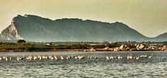#fenicotteri e #tavolara visti dallo #stagno di #SanTeodoro. #Olbia #Gallura #Sardegna #sardignagalana