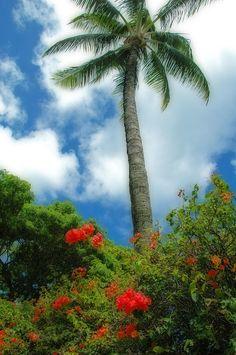 ✮ Princeville, Kauai, Hawaii