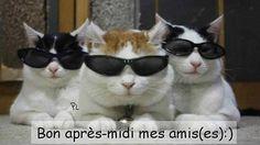Bon après-midi mes amis(es) :) #bonapresmidi chats lunettes de soleil bon apres midi humour