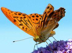 Картинки по запросу фото красивых бабочек