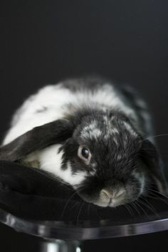 Model Bunny Has a Very Professional Photoshoot