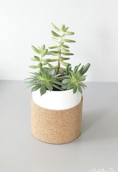 Chic little succulent planter using an upcycled glass jar and a sheet of cork.