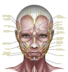 Cure Your Face And Neck Of Lines, Folds, Sagginess And Other Aging Problems Within Weeks