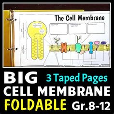 16 Cells Movement In Out Of Cells Ideas Teaching Biology Science Biology Science Cells