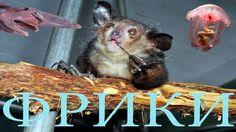 Ужасные животные фрики #2