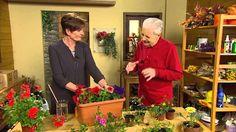 Balkónové rostliny - zamezení stresu z přehřátí Suit Jacket, Plants, Youtube, Balcony, Flora, Jacket, Plant, Suit Jackets, Planting
