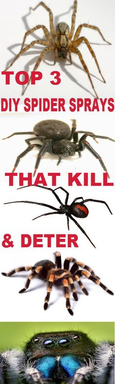 TOP 3 DIY HOMEMADE DAILY OR DISASTER SPIDER SPRAYS - KILL & DETER SPIDERS FROM INVADING - THEGREENPREPPER