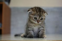 Why is the Kitten sad? Oh, let us count the ways...