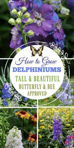 for Growing DELPHINIUMS Delphiniums are a favourite flowering perennial for cottage gardens. This fact sheet provides basic information to help beginner gardeners choose the best plants for their gardens.Delphiniums are a favourite flowering perennial for Gardening For Beginners, Gardening Tips, Gardening Vegetables, Gardening Quotes, Amazing Gardens, Beautiful Gardens, Pot Jardin, Beautiful Flowers Garden, Garden Cottage
