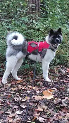 ABC22 Dayton's Dog of the Day - Boonen