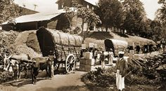 Picture post card depicting coolies loading bullock carts with cases of tea in the highlands of Ceylon circa 1900 Old Pictures, Old Photos, History Of Sri Lanka, Bullock Cart, Coffee Industry, Tea Plant, Tea Box, Rare Coins, People Of The World