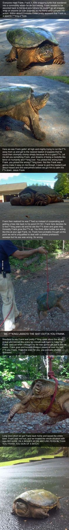 The adventures of Frank the Snapping Turtle