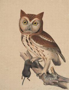 owl-illustration by e-liza