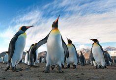 20 fotografie di pinguini che dimostrano quanto siano straordinari