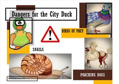 Dangers for the city duck