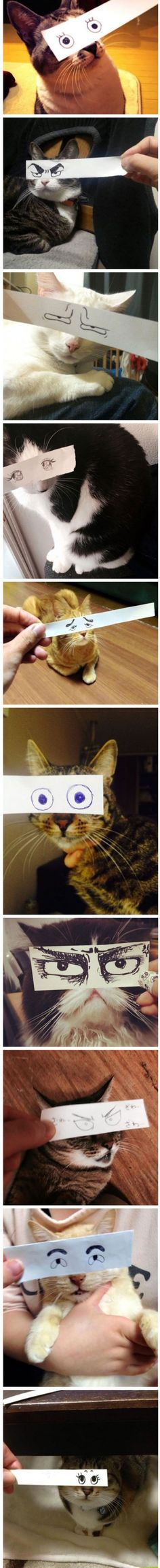 12 Funny Pictures Of Cats With Paper Eyes ( ) Funny Animal Pictures, Funny Animals, Cute Animals, Funniest Animals, Crazy Cat Lady, Crazy Cats, Weird Cats, I Love Cats, Cute Cats