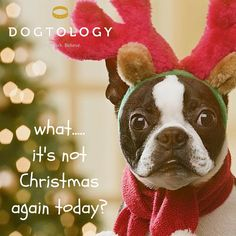 What.....it's not Christmas again today?