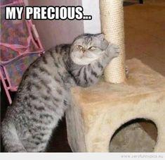 My Precious....very Funny Meme Comic Cat - Really Funny Meme ...